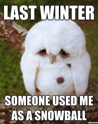 That feely feel. . zipmeme. I feel sorry for that owl.