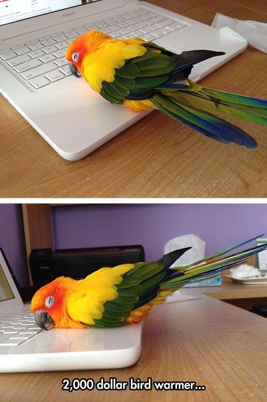 that's nice. .. 2 000$ Facebook machine Bird computer Cute