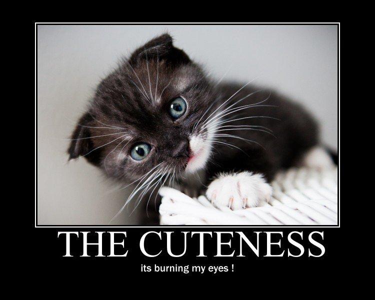 The+cuteness+i+hate+tags_5889da_3248013.