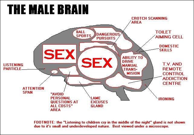 The Male Brain. .