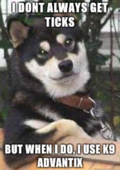 The most interesting dog in the world 2. . unit Mulatii' tartar, tolit,,