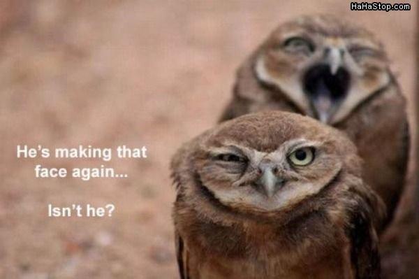 The face. O.o. the face owl