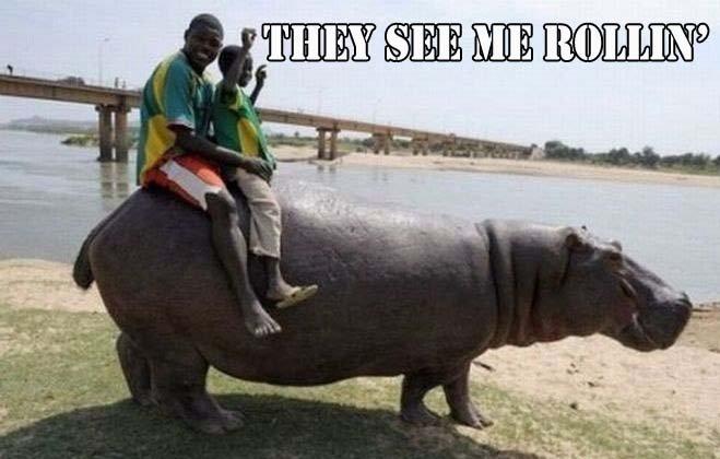 They Hatin'. . roll bob