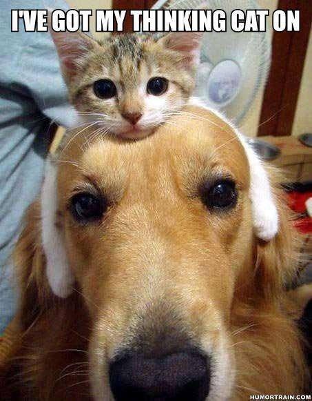 "Thinking cat. I found a thinking cat for me . Caq"" HUM. I had to downgrade... cat Dog pet funny animal"