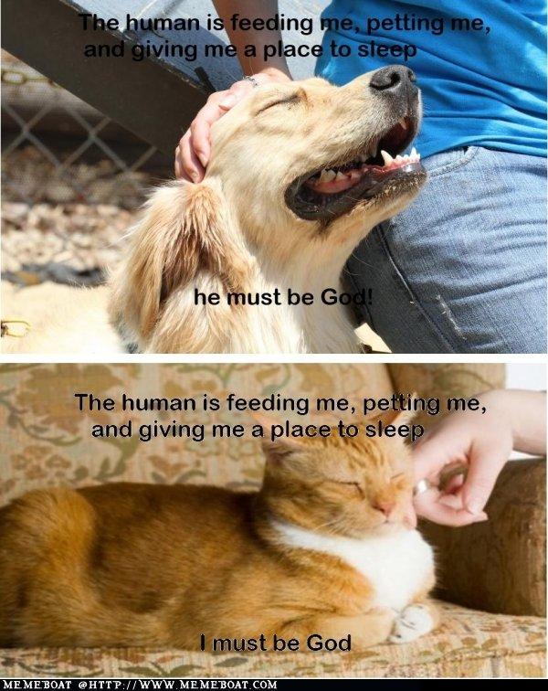 Thinking: Cat Vs Dog. .. OBEY!