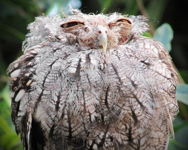 This owl. Is prettier than you.. Mr. Miyagi