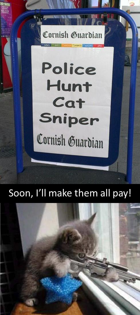 Those damn cat snipers. .