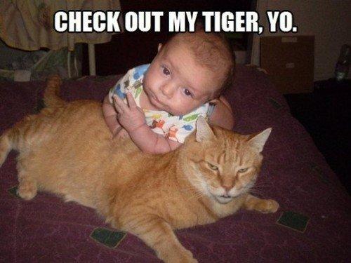 """Tigers. . NIT MY TIGER. """""""