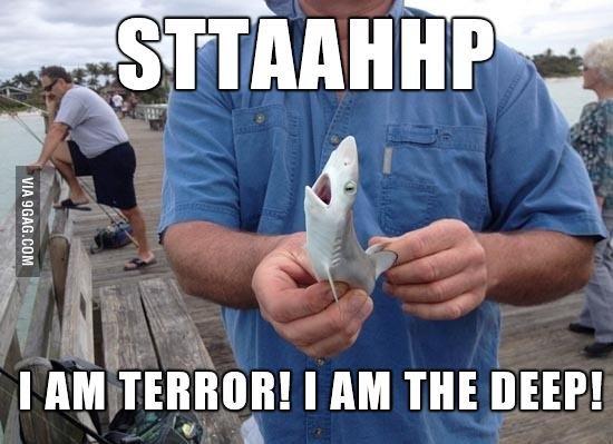 Tiny Shark. .