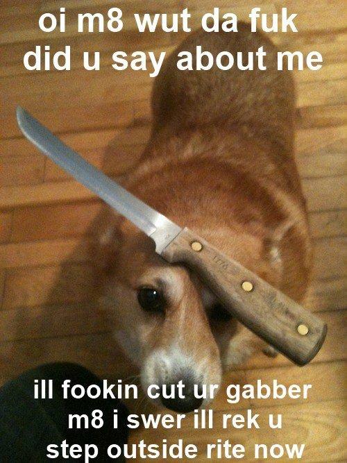 title. As seen on: www.facebook.com/BossURLIsBoss. ill fookin but i' ': gabber. gotta go fast!!!!!!!