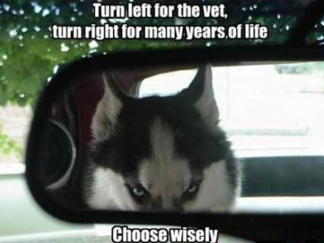title. desc... hfw no vet trip <-----