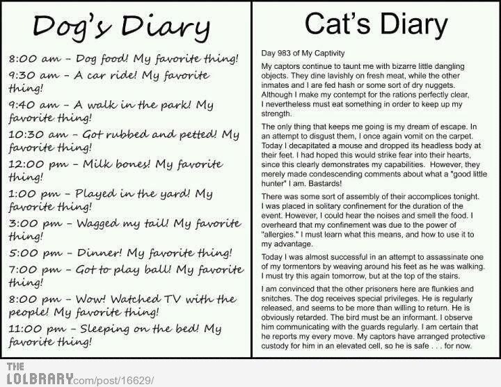 Title. www.ebay.com/itm/321220855010?ssPageName=STRK:MESELX:IT&_trksid=p3984.m1555.l2649. Diary Hing! flai' we! peepul. . g THE Cat' s Diary Day an at My mama M