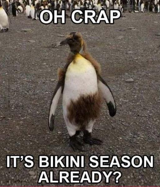title. . IT' S BIKINI SEASON ALREADY? found on fb