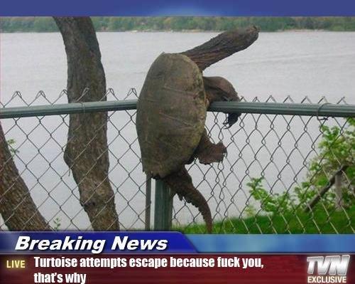 Tortoise. tortoise. Breaking Ne WE LIVE allennis BERNIE WEI mill, thatt' s Itiots. RUUUUUUUUUUUN!!!