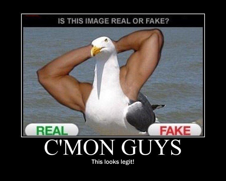 Totally Legit. . Cyqv/ Ci- This looks legit!. It's fake! real seagulls have shorter necks!
