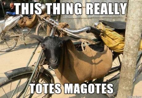 Totes Magotes. . Thta' Llr IPI i
