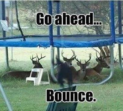 Try it. idk if repost.. antler Deer Trampoline