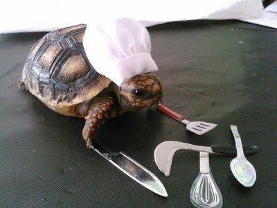 "turtle chef. .. ""Ahh, """