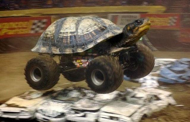 Turtle Truck. .. Turtle Tank