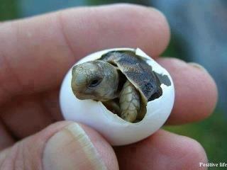 Turtle.. .. i like turtles