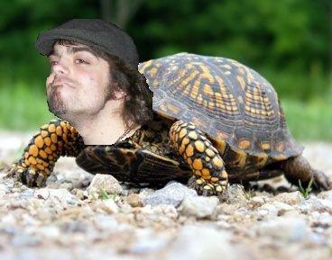 Turtle man movie - photo#27