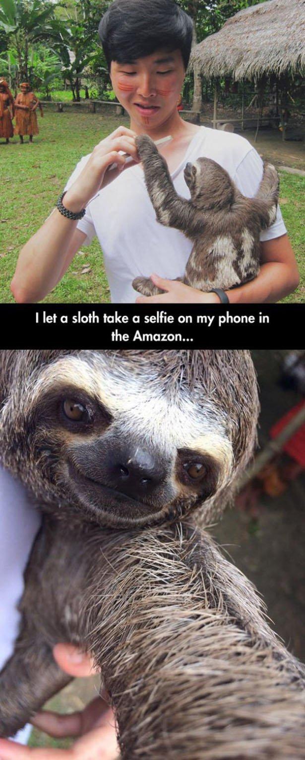(untitled). sloth time. the Amazon... fl 5' 11. extremely photogenic sloth.
