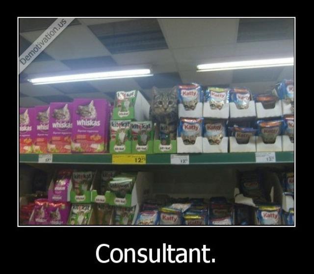(untitled). . Consultant.. Catsultant