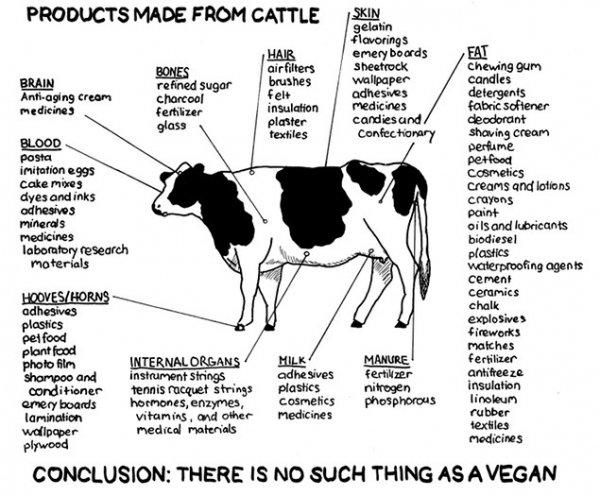VEGANS. You mad Vegans?. and ' admire: {Hwy ttji% titta rt' -minis meat Prints teigen insulation hung; humans. mayaha, ' ts ' reir.. m la: - , and war medicines