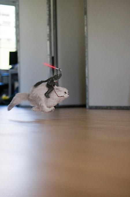 Vader's steed. Even Vader needs a lift sometimes. vader cat darth