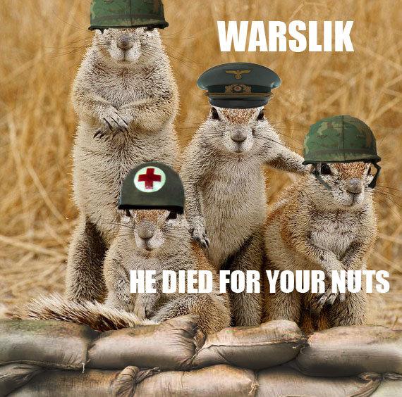 "WARSLIK. From Wikipedia: ""Spermophilus is a genus of ground squirrels in the family Sciuridae. The majority of ground squirrel species, over 40 in total, a War Medic sandbags helmet Squirrel squirrels soldier souslik suslik funny animal Animals"