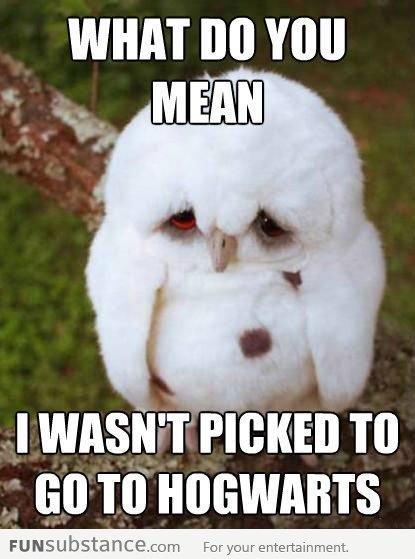 Wasn't chosen for hogwarts. . WHAT BO VIII! J: an In funny Cute meme lol
