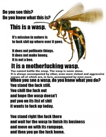 Wasp. .