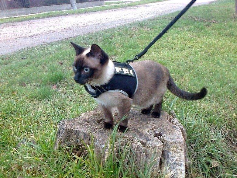 We're Fucked.. .. Feline Booty Inspector