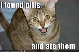 weeeeeee!. .. Repost Cats cat pill pills crazy Drugs Cute FJ level ahhh meow