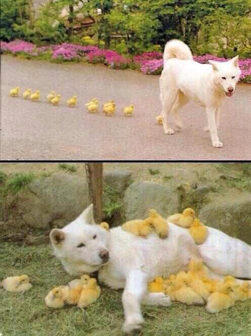 Weird Looking Duck. .