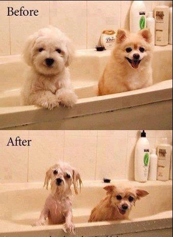 Wet Pups.. Indeed.