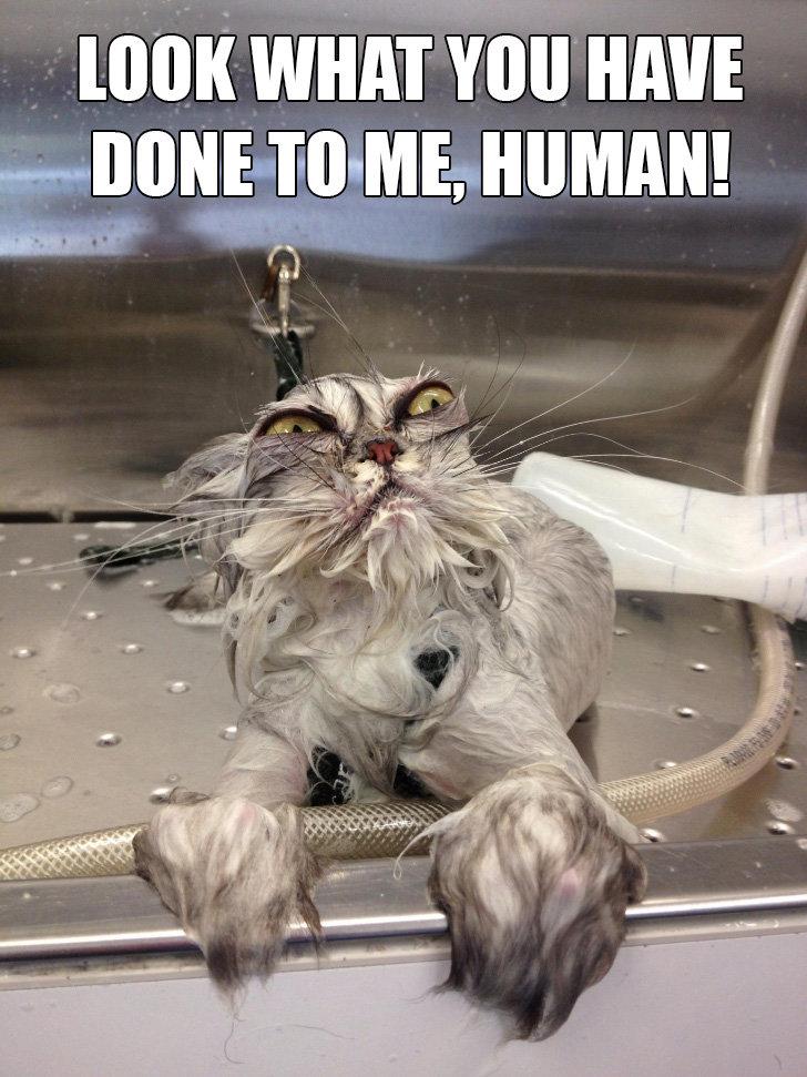 wet pussy. .