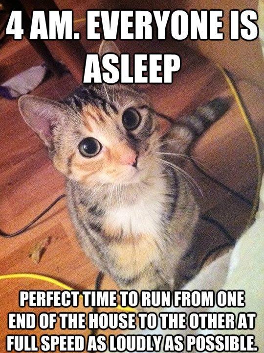 What a CATastrophe. Get it? Catastrophe? No? . a, All maven: Isl