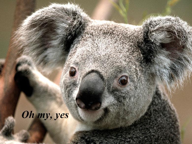 What? The Professor is a koala?. Futurama....