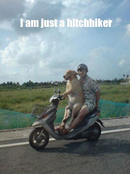 When you need a ride. OC captions. asdasdasdasd