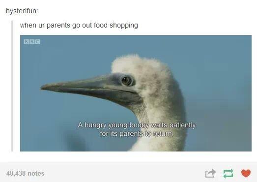 When your parents go shopping. . when m parents go out food shopping. Mmmmmmmmmmmmmmmmmmmmmmm those ravinous young boobies