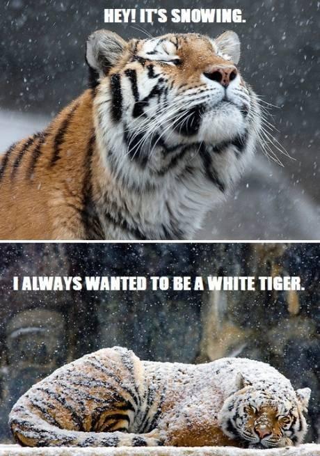 White is always better. . um' IFS sauna. I. Still just cats. Big beautiful cats.