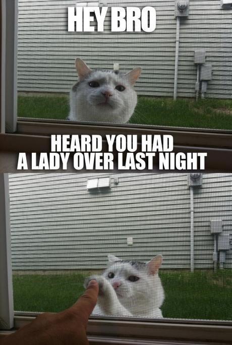 "who da pussy cat. . HEARD ""III HM] MAII. cats are awesome"