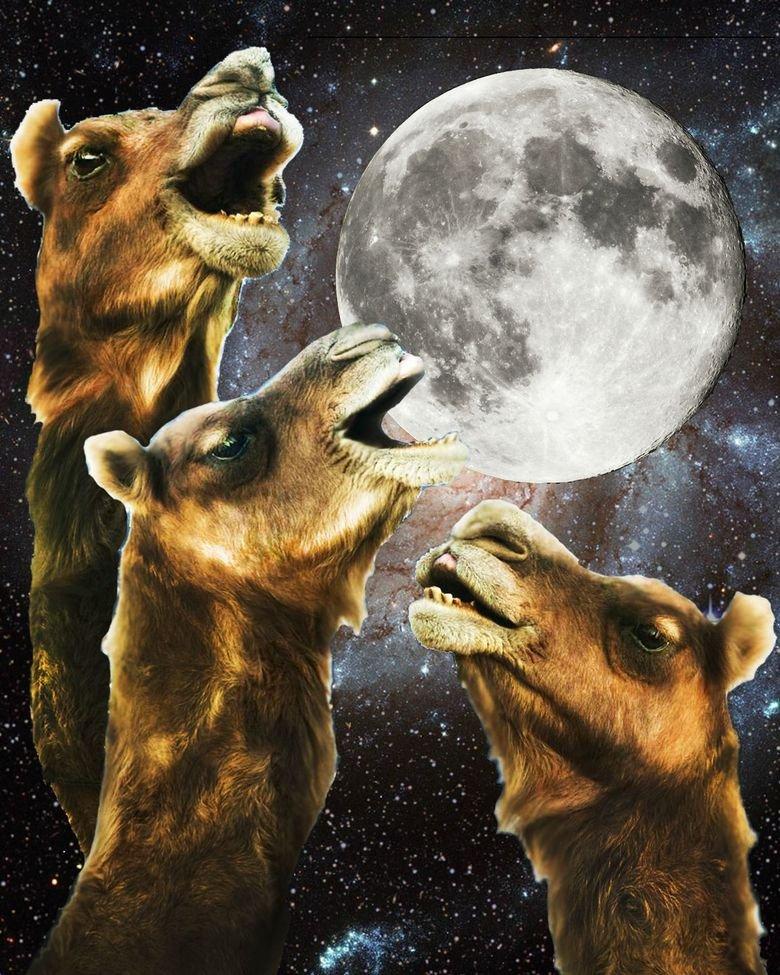 Whut. . Awesome cammel Moon amazing