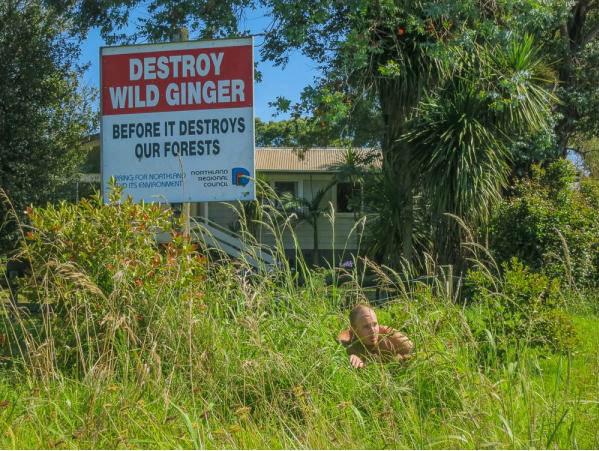 Wild Ginger. .