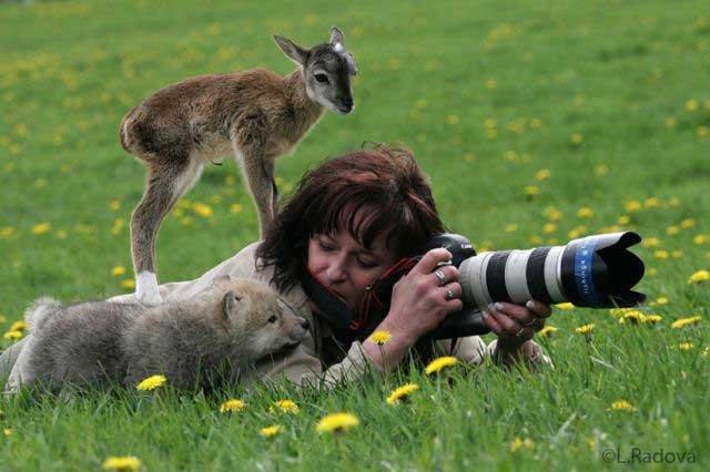 Wildlife Photography. .