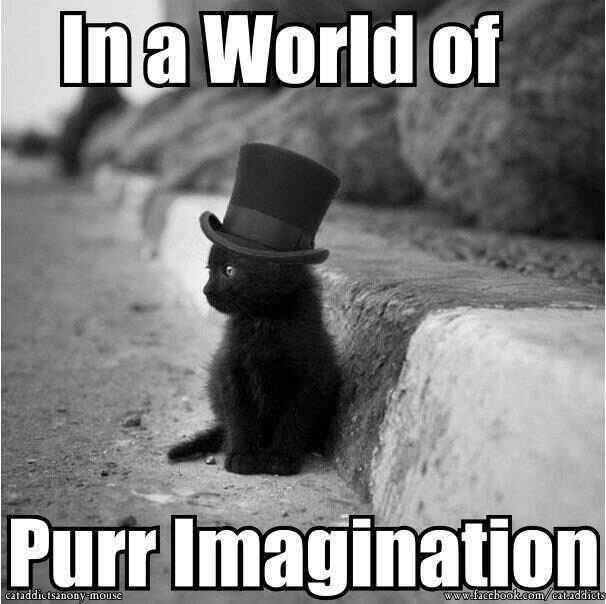 Willy Wonkat. .