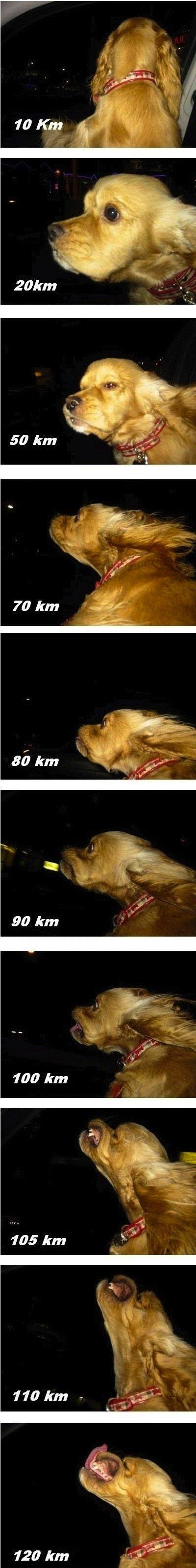 "Wind-Blown Dog. . was km t, ""ye tft,. 200mph !!"