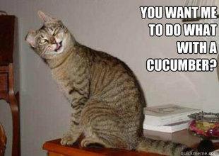 Wtf Cat. .
