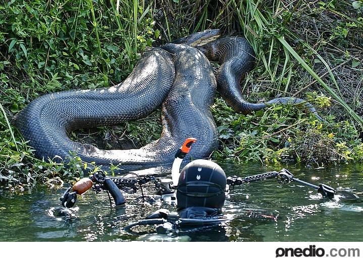 WTF!!!. .. You cant scream if you cant breathe anaconda Snake shock shocking WTF